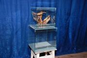 Террариум для улиток и скорпионов! Продам террариум