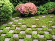 Продаем мох для озеленения притененных участков.